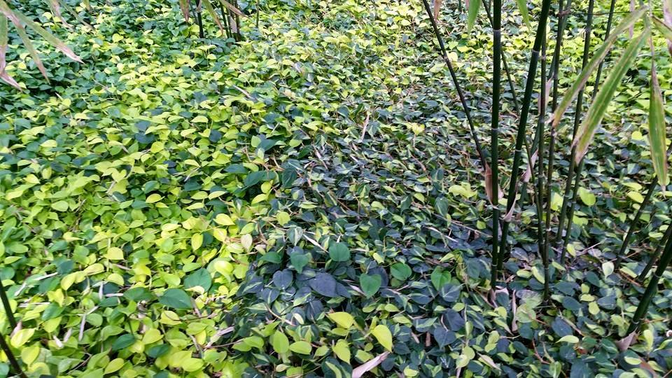 Leaves by Slicenndice