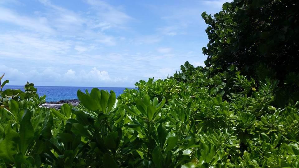 Tropics by Slicenndice
