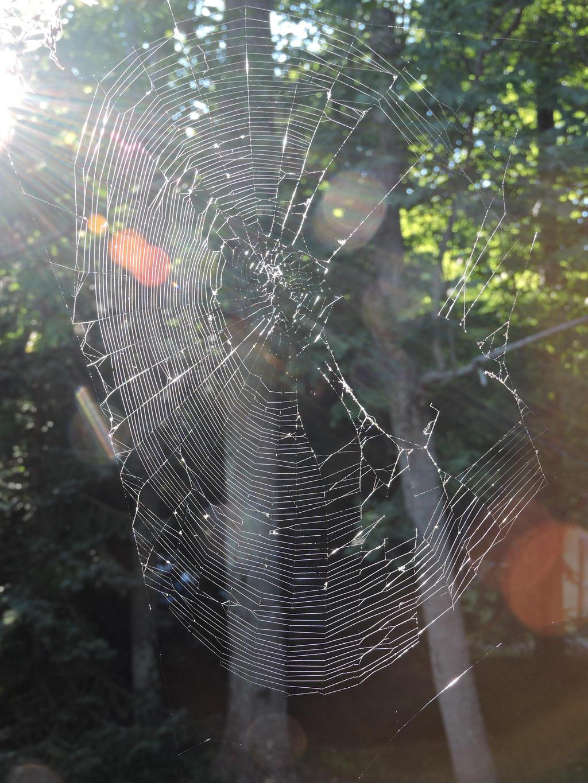 Spider Web by Slicenndice