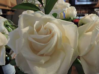 White Rose by Slicenndice