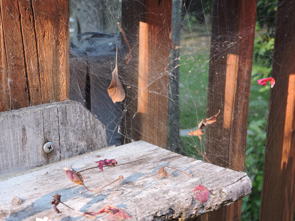 Webs by Slicenndice