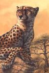Cheetahs Never Prosper