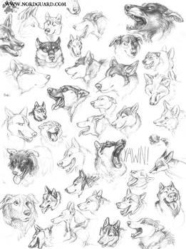 Dog Head Studies