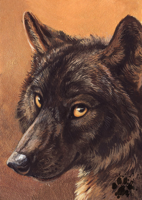 Black Wolf by screwbald