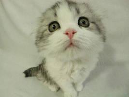 cute by Hiro-ki2