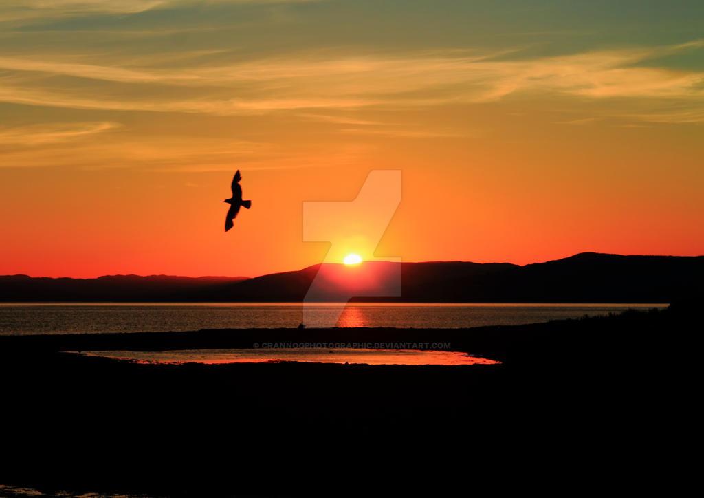 Evening flight by Crannogphotographic