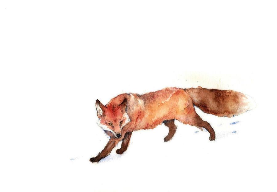 A fox by Loputyn