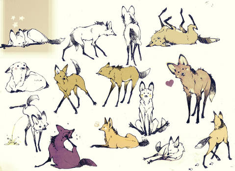 A lot of Maned Wolf