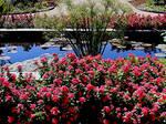 Missouri Botanical Gardens 6