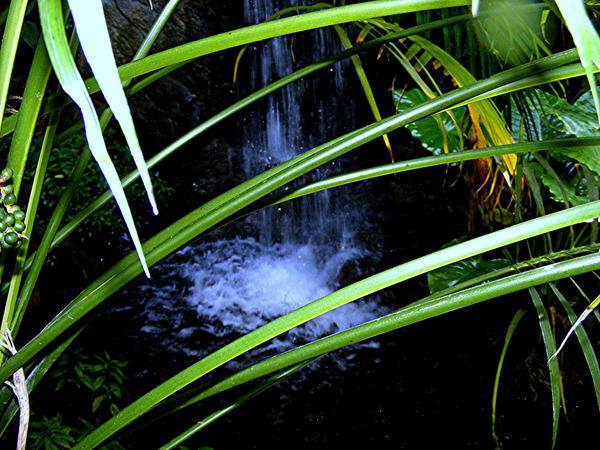 Missouri Botanical Gardens 21 by PridesCrossing