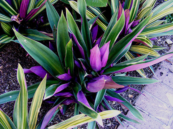 Missouri Botanical Gardens 41 by PridesCrossing