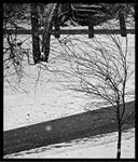 Winter in BlackandWhite 4