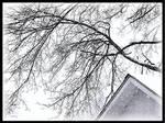 It Is Still Winter 1 by PridesCrossing