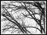 It Is Still Winter 2 by PridesCrossing