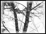 It Is Still Winter 3 by PridesCrossing