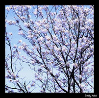 Spring In Missouri 6 by PridesCrossing