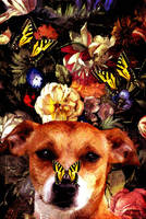 Dog With Butterflies by PridesCrossing