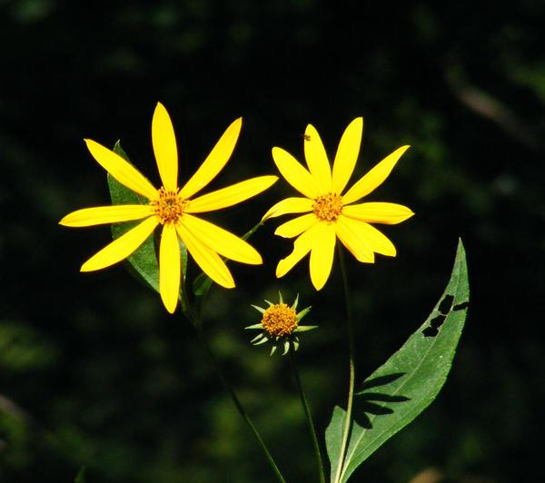 Random Flowers 2 by PridesCrossing