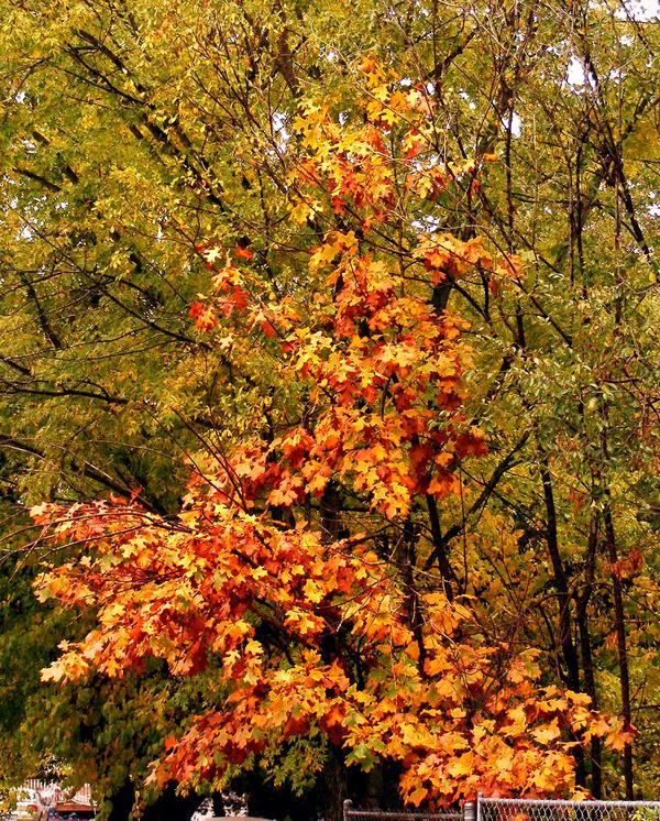 Memories of Fall 2008 by PridesCrossing
