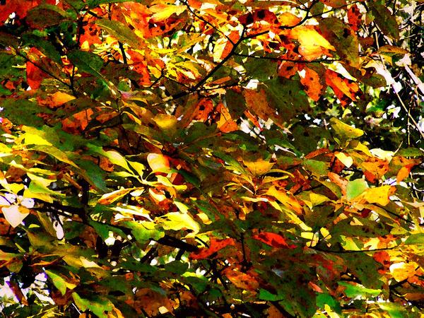 Memories of Fall 2008 11 by PridesCrossing