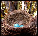 Robin Eggs 1