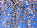 Spring 2009 3 by PridesCrossing