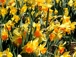Spring 2009 5 by PridesCrossing