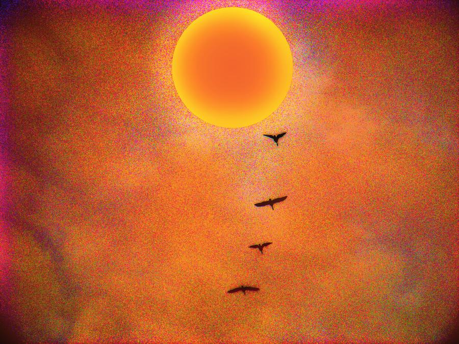 Sun Shine And Birds Dance