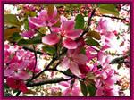 Missouri Blooms