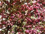 Missouri Blooms 2