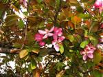 Missouri Blooms 3