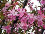 Missouri Blooms 4