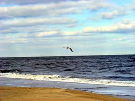 Virginia Beach 2