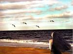 An Ocean Dream 1