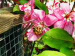 It Bee Spring