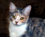 Our Kitty Vaso