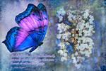 A Butterfly Dreams