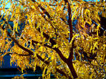 Fall At FairField Inn 3 by PridesCrossing
