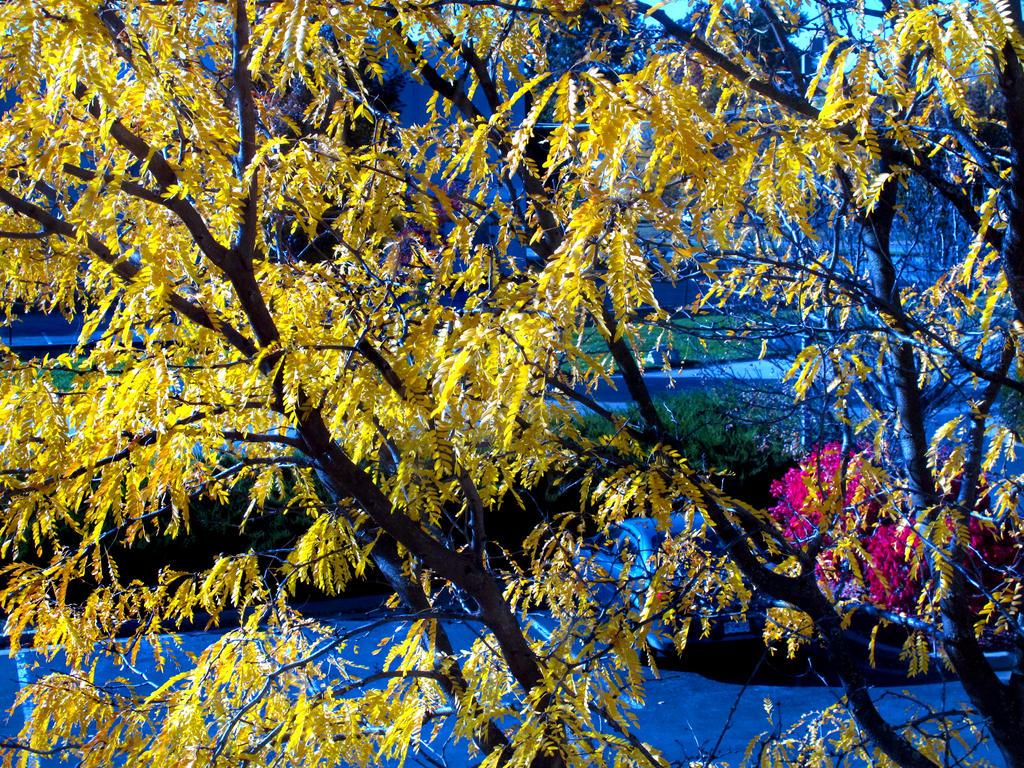 Fall At FairField Inn 2 by PridesCrossing