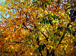Fall At FairField Inn 1 by PridesCrossing