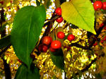 Fall At FairField Inn 0 by PridesCrossing