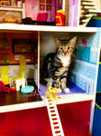 Cat House by PridesCrossing