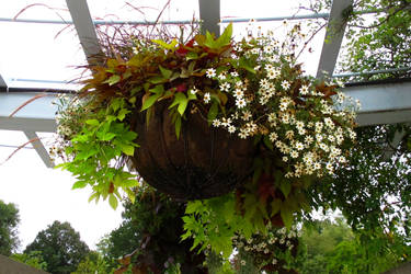 Untitled flower basket by PridesCrossing
