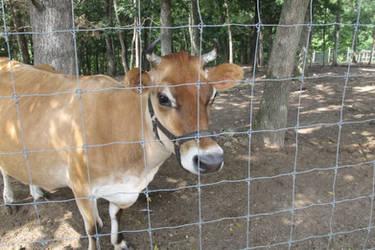 CritterLane Petting Zoo