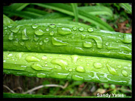 Green And Wet by PridesCrossing