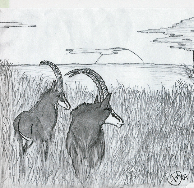 Giant Sable Antelope by BrookeScuzzi on deviantART
