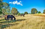 Three horses by kllebou