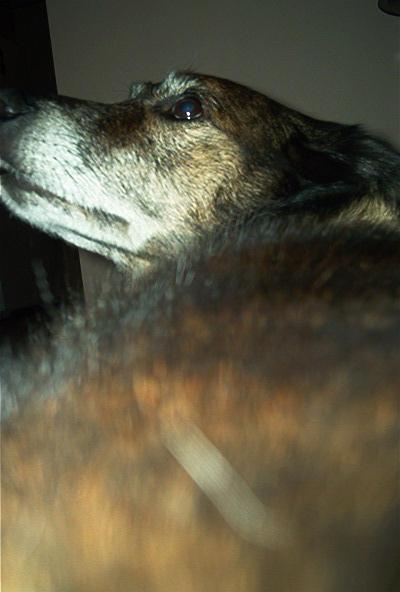 Lola the Dog by silvergrl