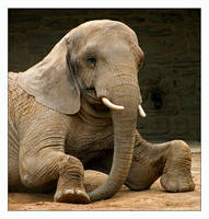 Elephant Down by Goodbye-kitty975