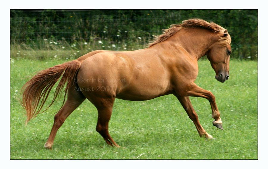 Powerhouse Pony by Goodbye-kitty975